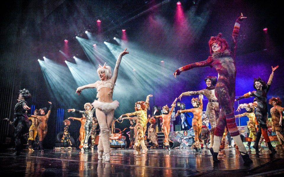 'Midwest Regional Ballet Cats