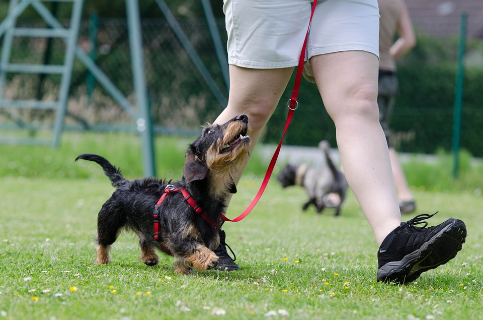 City of Pittsburg Parks & Recreation Department offers dog obedience classes