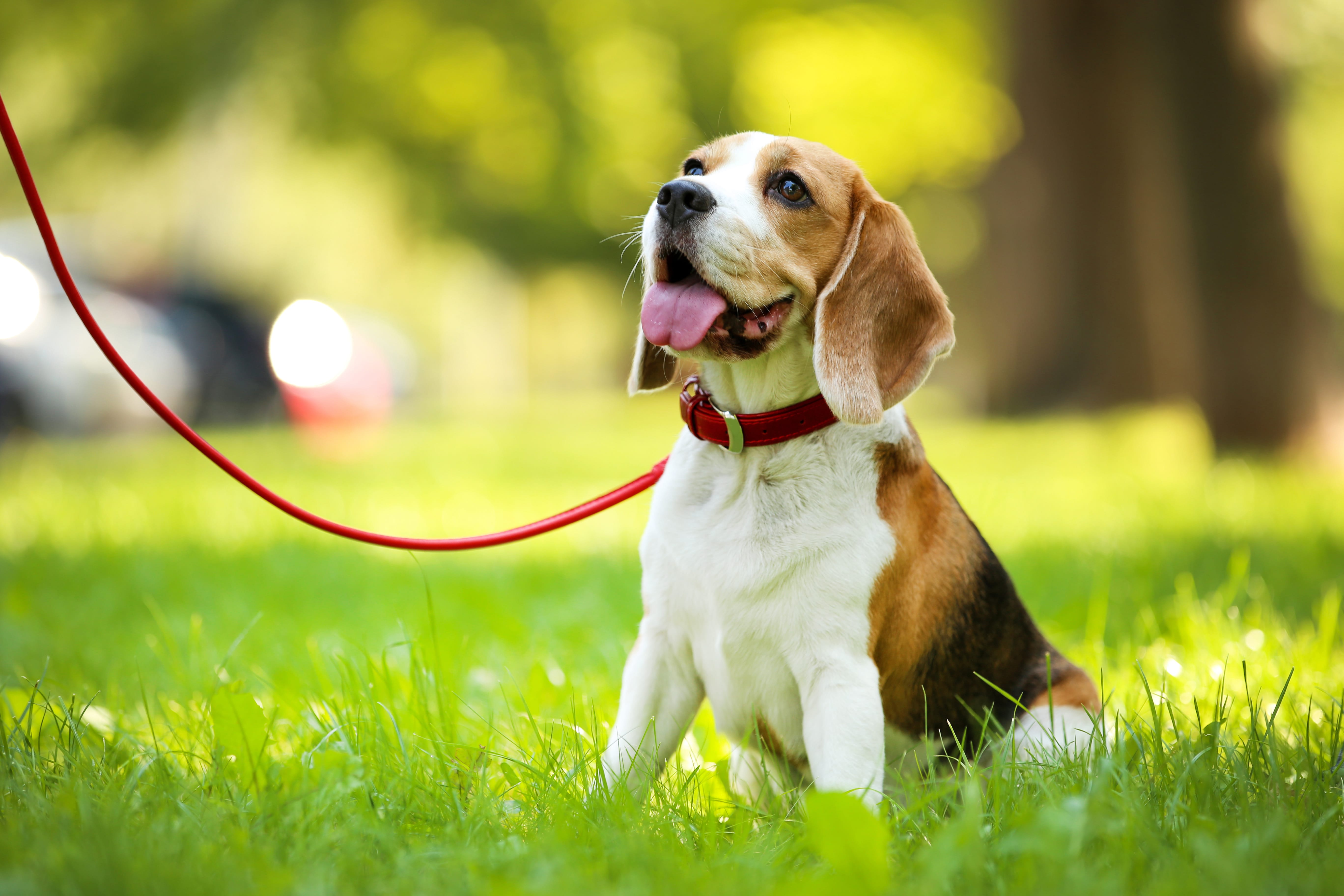 Lucky Pup 5K to benefit the SEK Humane Society