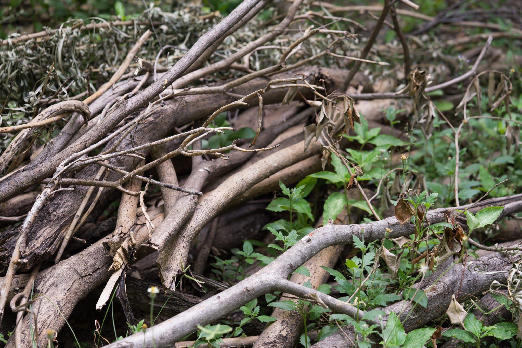 City organizes tree limb pick-up services following Saturday's storm