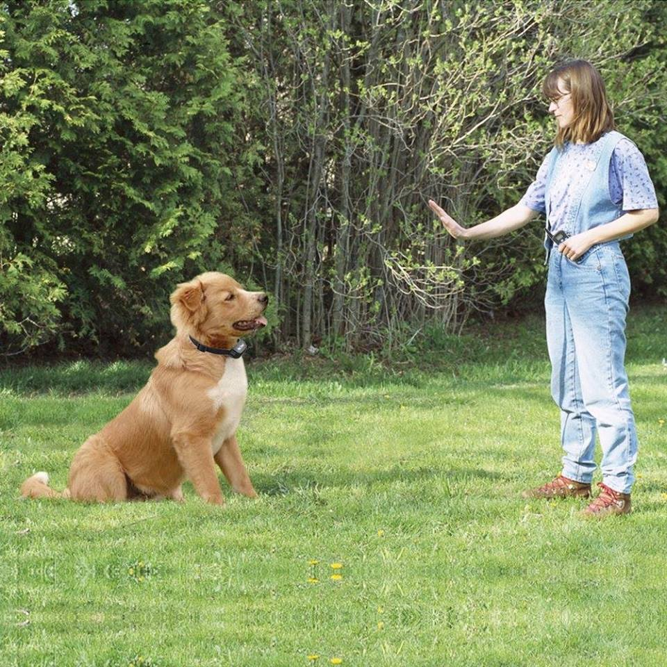 Dog obedience image