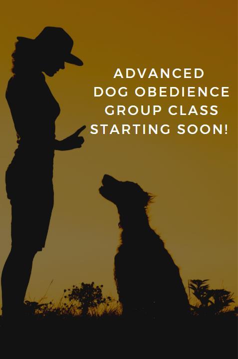 Dog Training Image